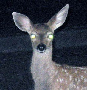Graded Language-avoid the deer in headlights