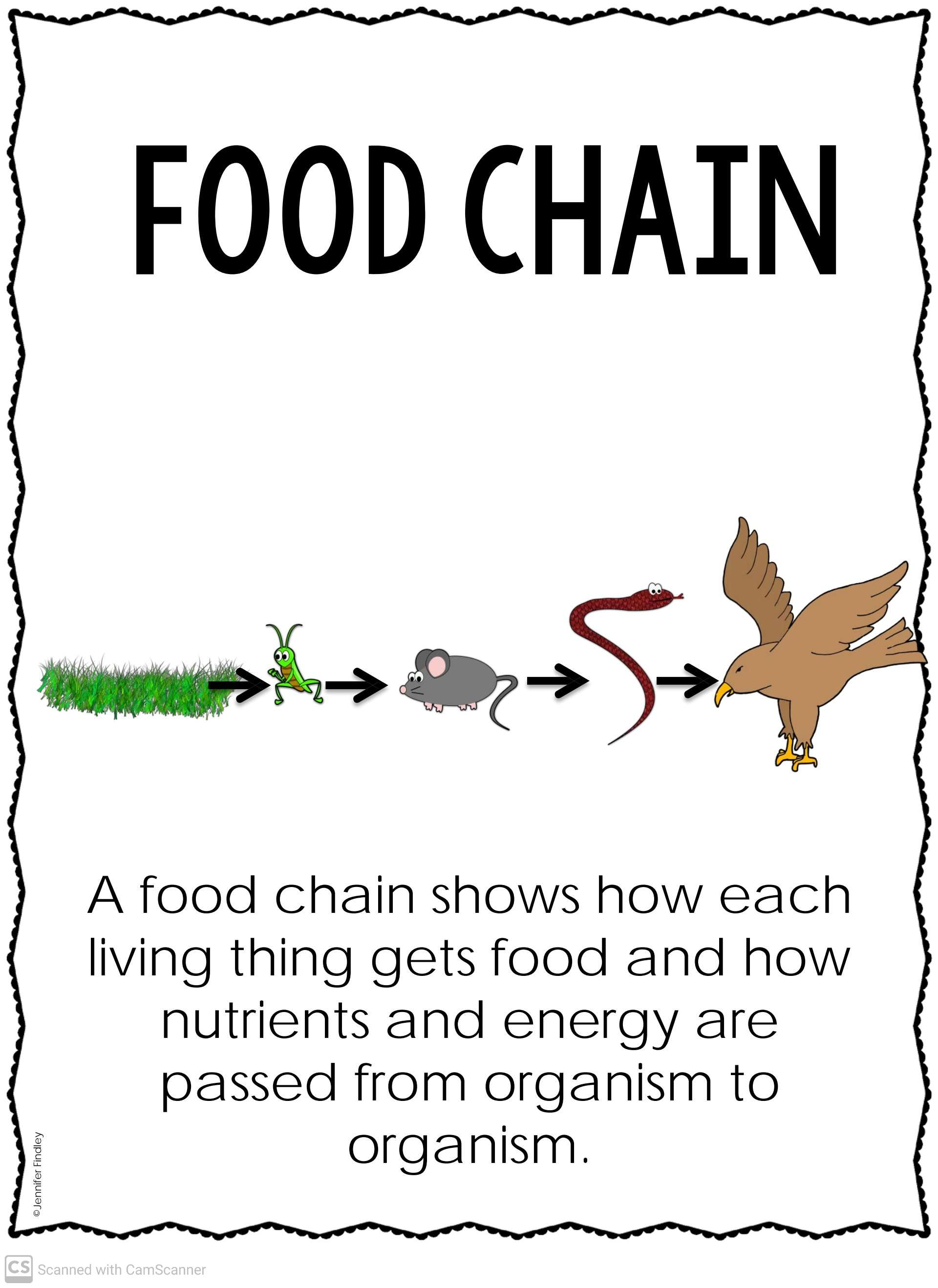 Food Chain Flow Of Energy Teaching Kids To Read And Write