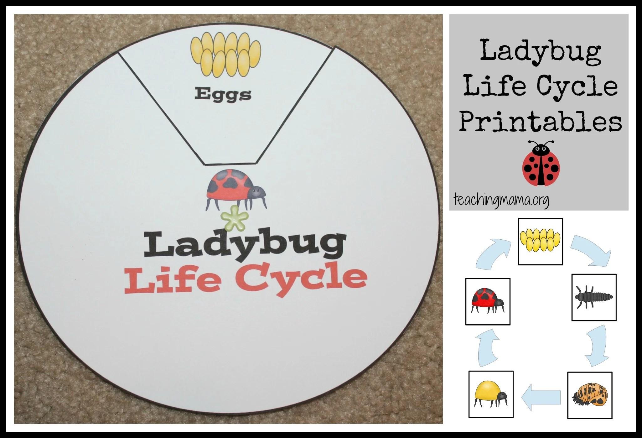 Ladybug Life Cycle Printables Amp Activities
