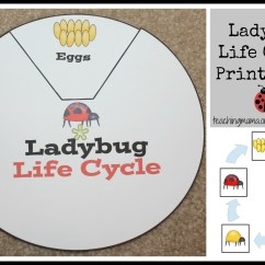 Bird Life Cycle Diagram 2004 Ford Expedition Radio Wiring Ladybug Printables And Activities