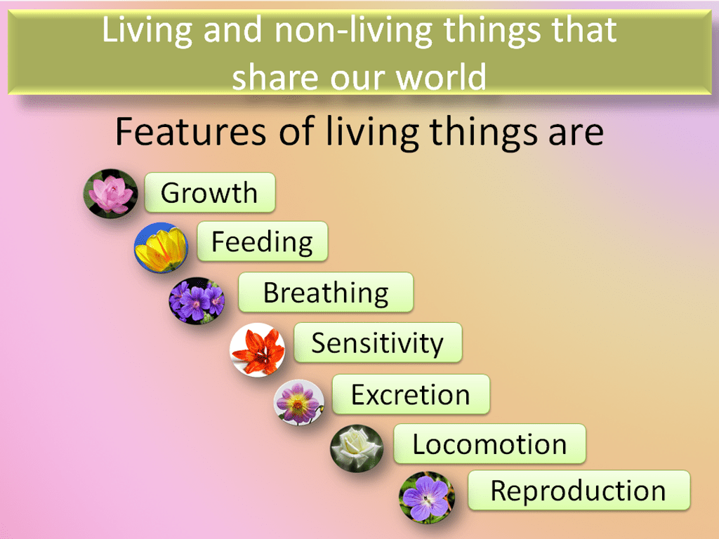 Living And Non Living Things That Share Our World Teacha