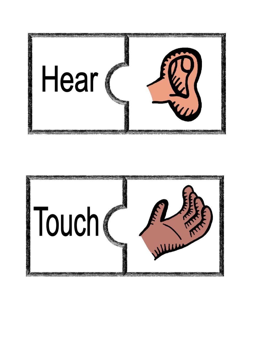 medium resolution of 5 Senses Puzzle and worksheet - Teacha!