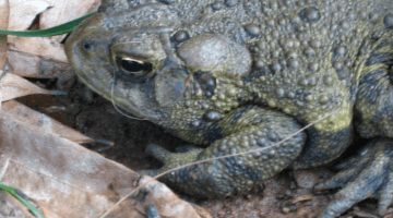 frog or toad: how we researched and figured it out   teachmama.com