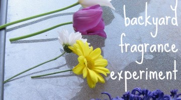 easy backyard fragrance experiment