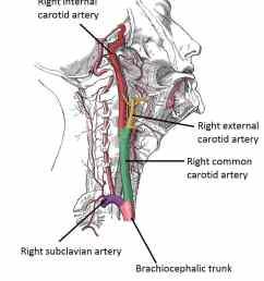 diagram of the throat bone [ 886 x 1094 Pixel ]