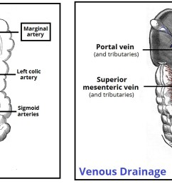 fig 3 the major arteries and veins supplying the colon  [ 1888 x 710 Pixel ]
