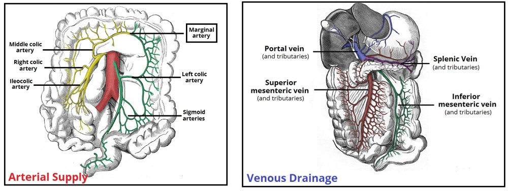 medium resolution of fig 3 the major arteries and veins supplying the colon