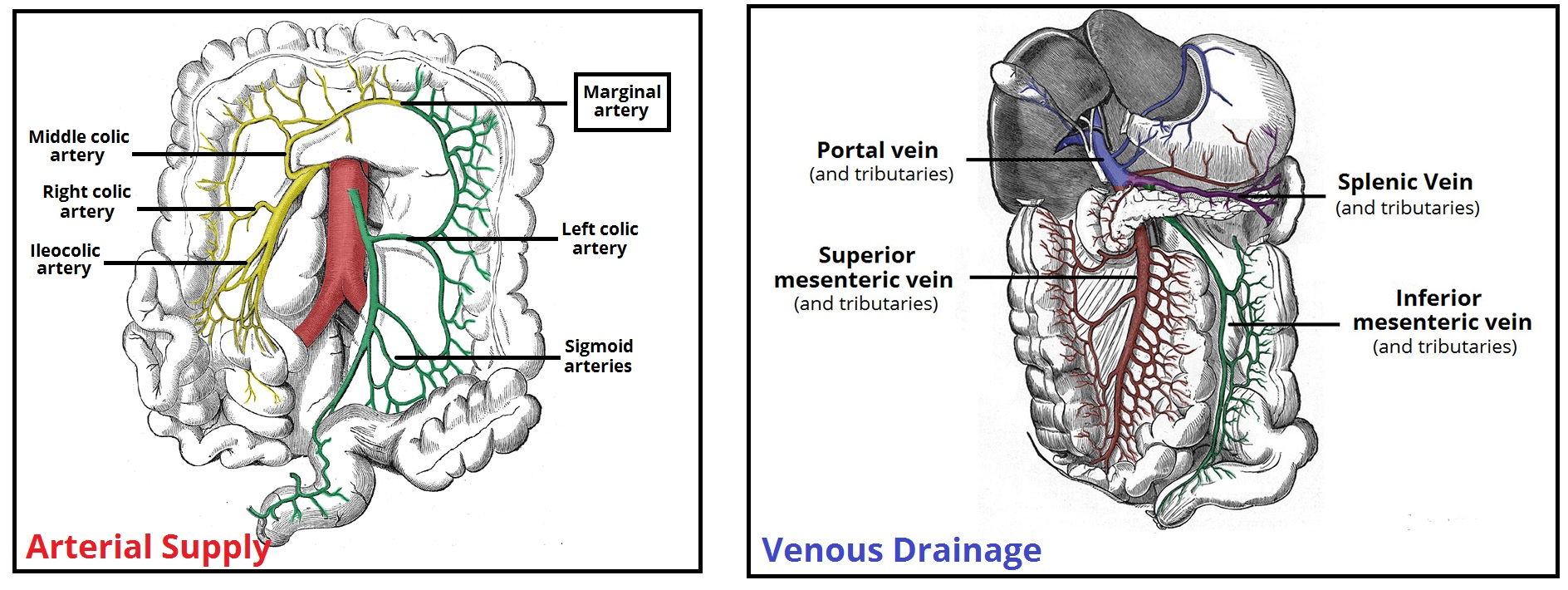 hight resolution of fig 3 the major arteries and veins supplying the colon