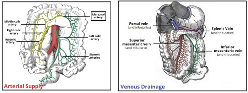 small resolution of fig 3 the major arteries and veins supplying the colon