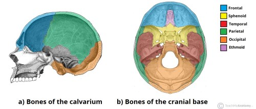 small resolution of fig 1 bones of the calvarium and cranial base