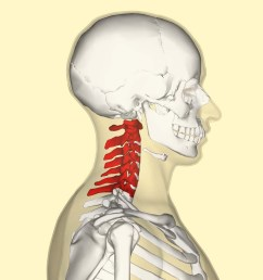part of the neck diagram [ 1024 x 1024 Pixel ]