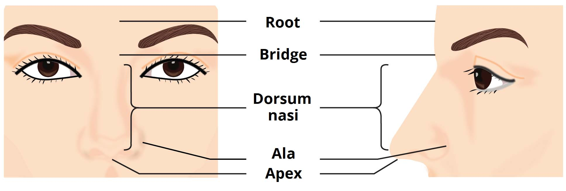 hight resolution of fig 1 surface appearance of the nose