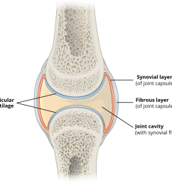 fig 1 the basic structures of a synovial joint  [ 1024 x 958 Pixel ]