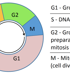 cell cycle diagram with answer [ 1354 x 768 Pixel ]
