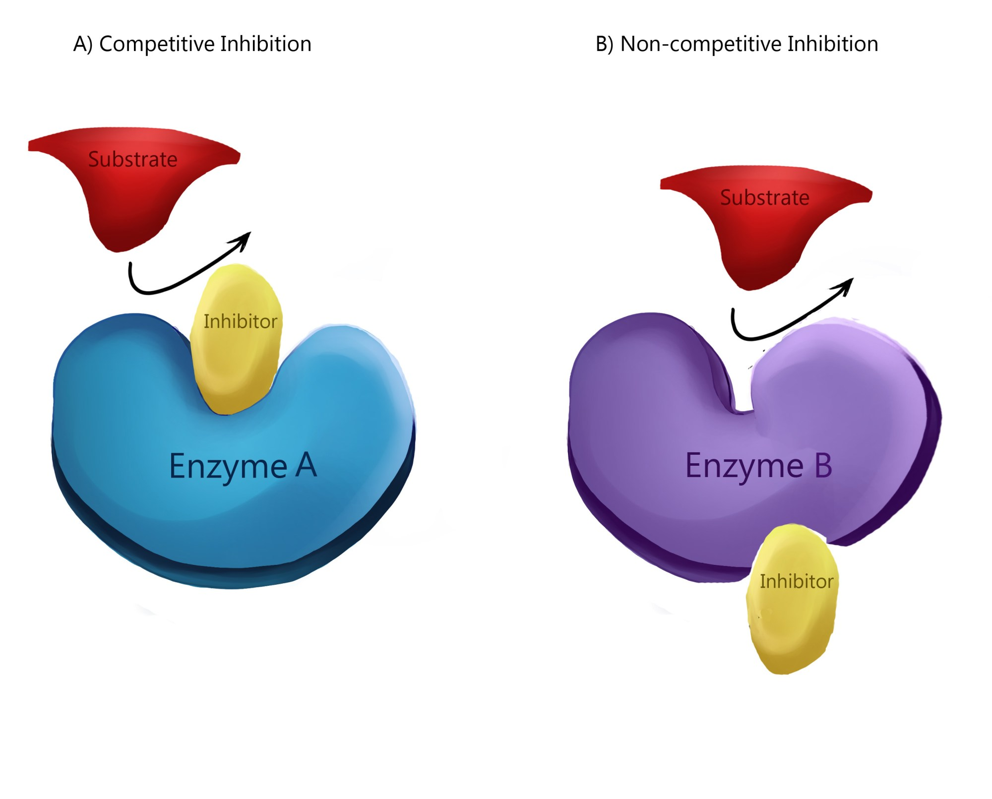 hight resolution of enzyme inhibition types of inhibition allosteric regulation teachmephysiology