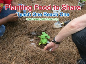 Planting Food to Share – Teach One Reach One