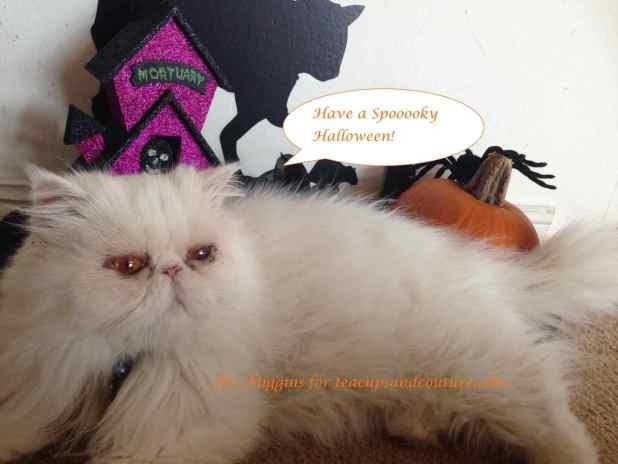 spooky-migs
