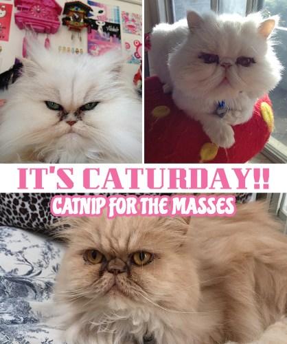 caturday cover -online promo