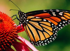 Lost Monarchs