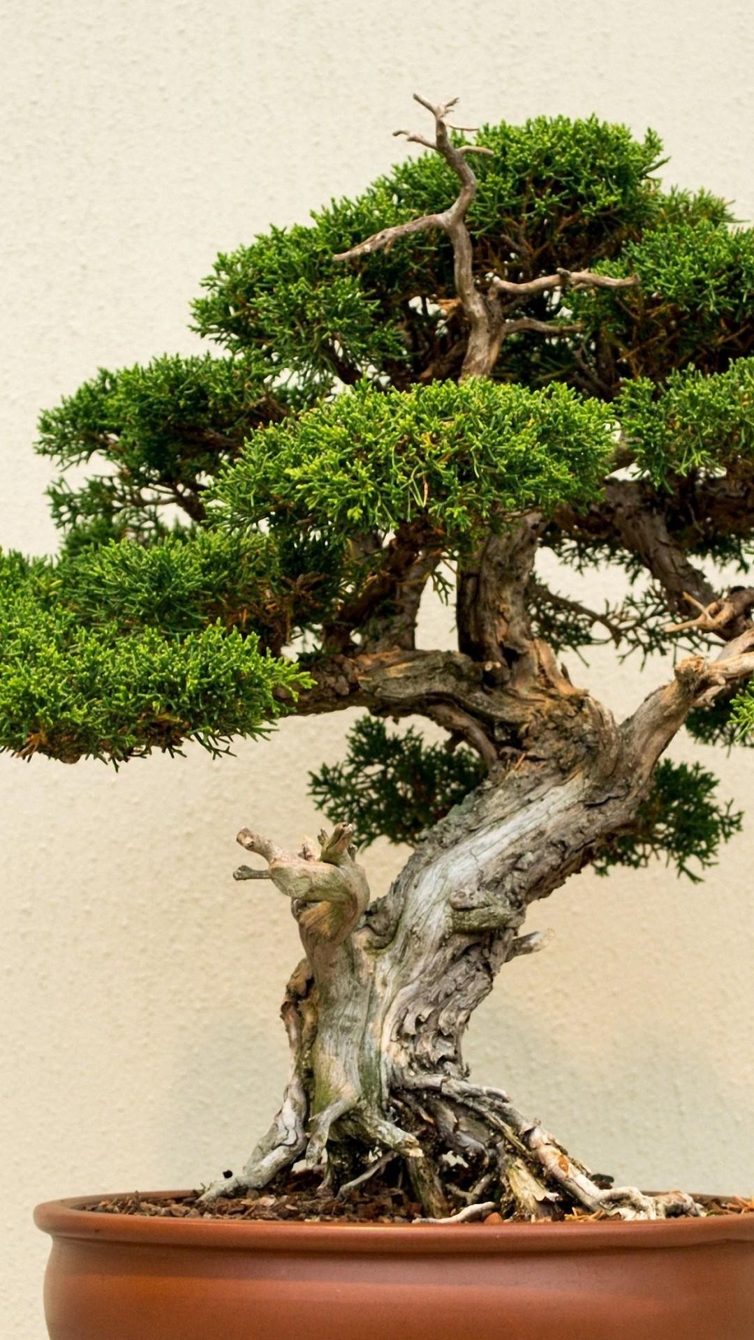 Bonsai Wallpaper : bonsai, wallpaper, Bonsai, Wallpaper, Iphone, 1080x1920, Teahub.io
