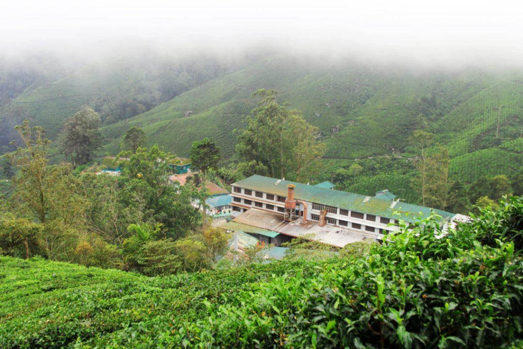 BOH (Best Of Highlands) tea factory