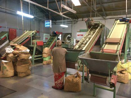 Tea production facility