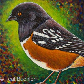 Spotted Towhee - 12 x 12 on Masonite