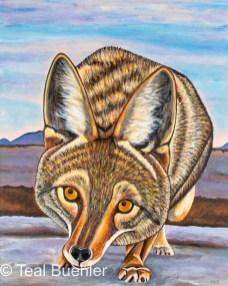 Foxy Coyote - 16 x 20 Acrylic on Canvas