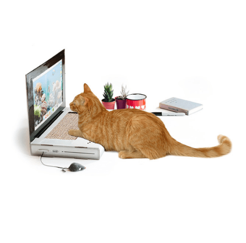cat laptop scratching pad