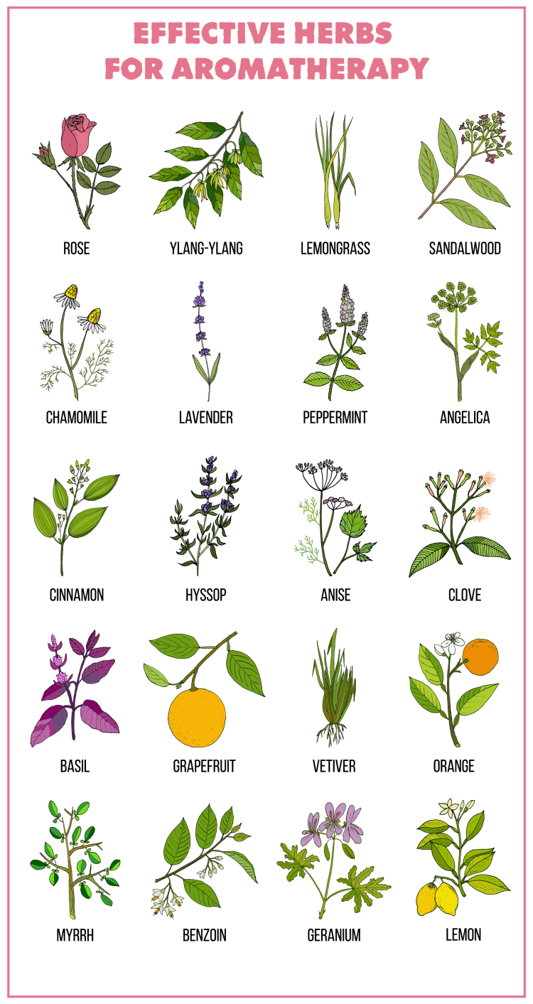 essential oils guide with the best essential oils and how to use essential oils, effective herbs for aromatherapy
