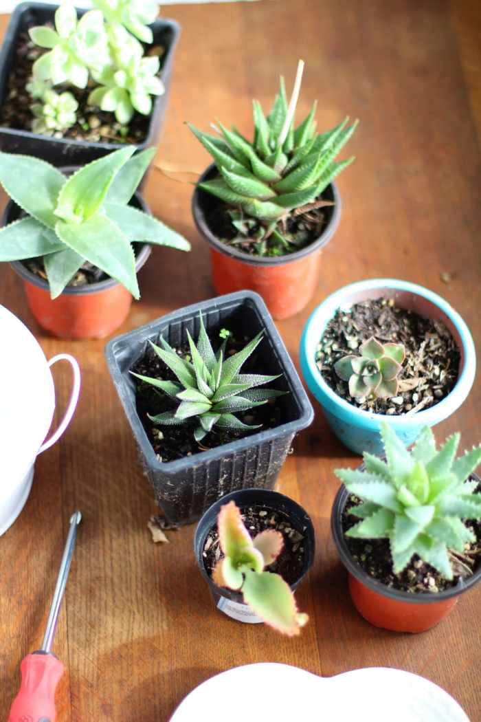 DIY tiered succulent planter supplies