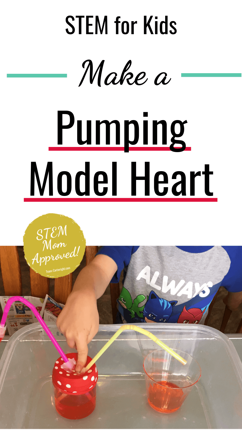 picture of a heart model pumping with text: STEM for Kids Make a Pumping Heart Model (STEM Mom Approved!)