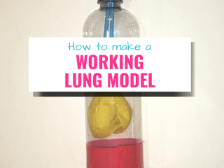how to make a working lung model for kids