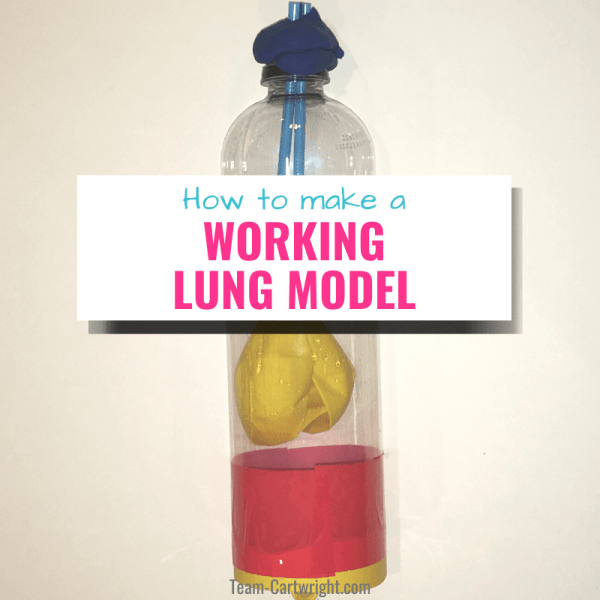 Working Lung Model for Kids