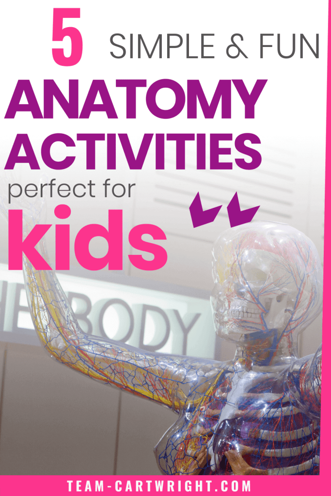 Simple and fun anatomy activities perfect for kids with picture of a human body model