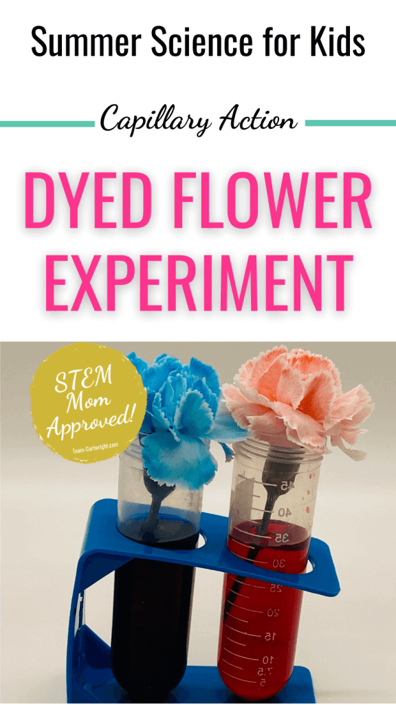 Text: Summer Science for Kids Capillary Action Dyed Flower Experiment. Picture: Blue and Red dyed flowers in blue and red water test tubes. Badge: STEM Mom Approved