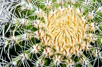 0 cactus 1