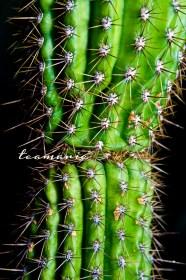 0 cactus 3