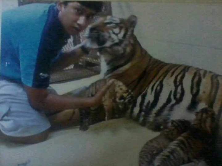 animal_show_trainers_specialist_abam_tiger