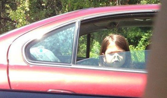 funny cute girl with her nose pressed against car window