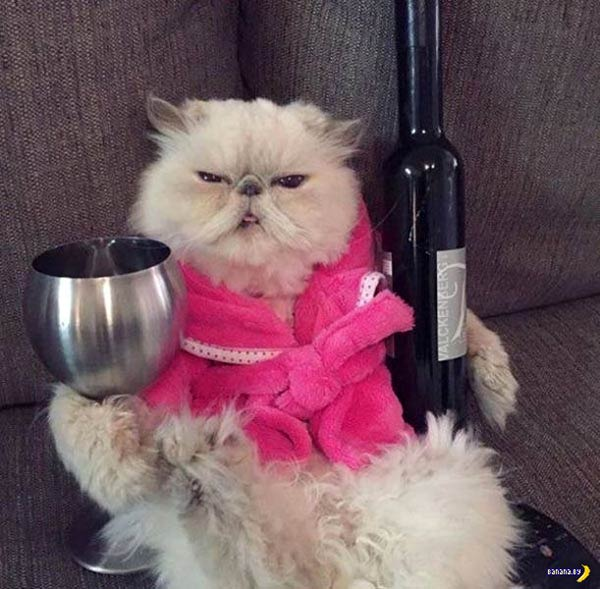 33 Funny Pics of Random Offbeat Weirdness ~ funny cat with wine bottle and glass