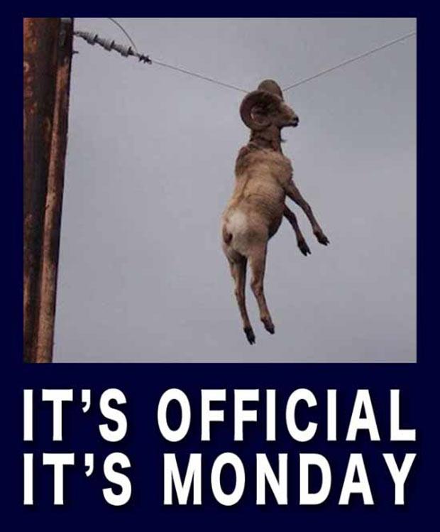 Monday Meme ~ It's Official