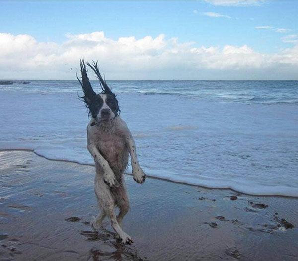 Cool dog walking on hind legs on beach
