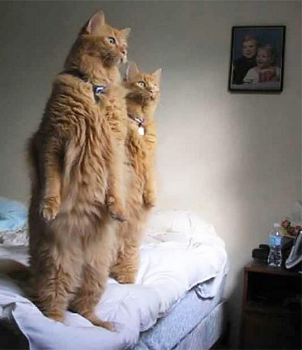 """""""We See You..."""" Creepy Cats standing on hind legs like humans"""