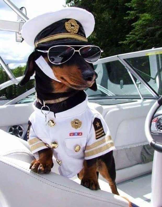funny boat captain weiner dog