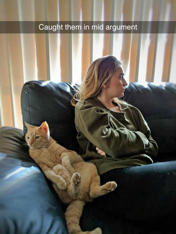 Image of: Funny Memes Cat And Wife Caught In Mid Argument Funny Snapchat Humor Babamail Funny Snapchats 24 That Lit The Internet On Fire Team Jimmy Joe