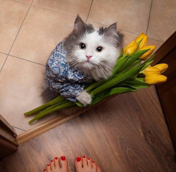 Adorable and thoughtful cat bringing floors to the door ~ 35 Funny Pics & Memes