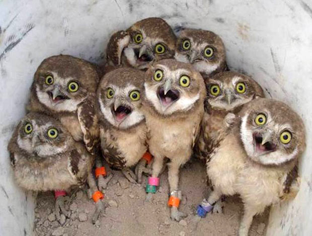 """That look when some tells the waitress,""""Why, yes, we will have dessert..."""" ~ 33 funny pics and memes owl chicks"""