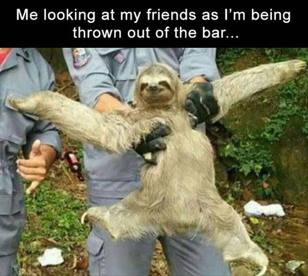 Funny Meme ~ Sloth ~ Me looking at my friends as I'm being thrown out of the bar