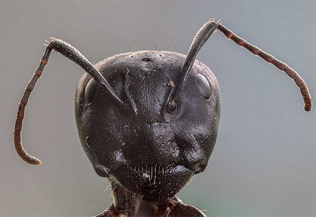Creepy close-up of ant head. Looks like a bad sci-fi alien